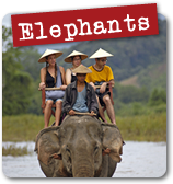 Elephant Experience